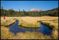 Visitor Looking, Upper Meadow and Lassen Peak. Lassen Volcanic National Park, California, USA.