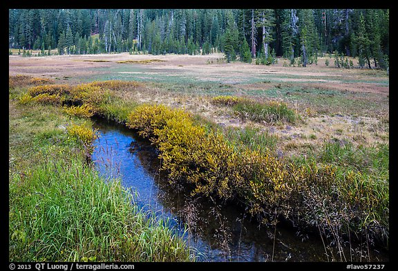 Stream in tree-bordered meadow. Lassen Volcanic National Park (color)