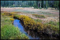 Stream in tree-bordered meadow. Lassen Volcanic National Park ( color)