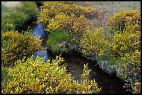 Shrubs and stream, late summer. Lassen Volcanic National Park ( color)