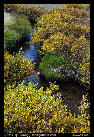 Shrubs in fall foliage along stream. Lassen Volcanic National Park (color)