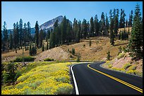 Road passing by Rabbitbrush in bloom. Lassen Volcanic National Park ( color)