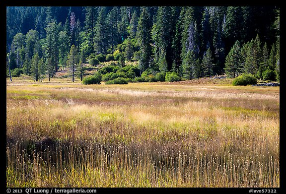 Drakesbad meadow, late summer. Lassen Volcanic National Park (color)