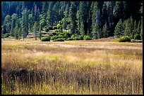 Drakesbad meadow, late summer. Lassen Volcanic National Park ( color)