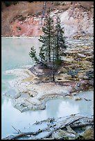 Shore of Boiling Springs Lake. Lassen Volcanic National Park ( color)