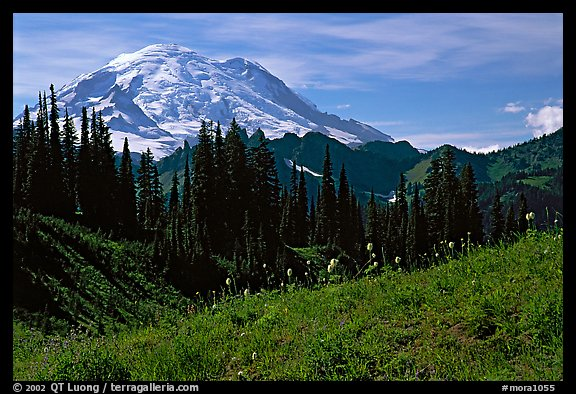 Mt Rainier from Tipsoo Lake area, afternoon. Mount Rainier National Park (color)