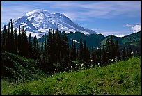 Mt Rainier from Tipsoo Lake area, afternoon. Mount Rainier National Park, Washington, USA.