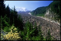 Mt Rainier above debris-covered Carbon Glacier. Mount Rainier National Park, Washington, USA.