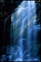 Waterfall in Carbon rainforest area. Mount Rainier National Park, Washington, USA. (color)