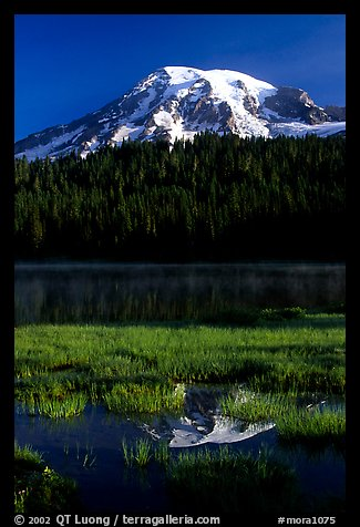 Mt Rainier reflected in Reflection lake, early morning. Mount Rainier National Park (color)