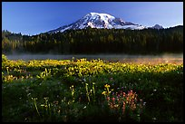 Carpet of summer flowers, Reflection Lake, and Mt Rainier, sunrise. Mount Rainier National Park, Washington, USA. (color)
