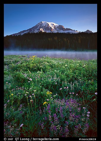 Wildflowers, Reflection Lake, and Mt Rainier, sunrise. Mount Rainier National Park (color)