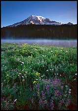 Wildflowers, Reflection Lake, and Mt Rainier, sunrise. Mount Rainier National Park, Washington, USA.