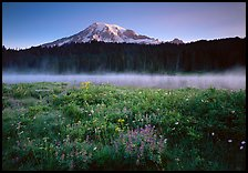 Wildflowers, Reflection Lake with fog raising, and Mt Rainier, sunrise. Mount Rainier National Park, Washington, USA.