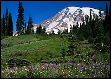 Meadow, wildflowers, trees, and Mt Rainier, Paradise. Mount Rainier National Park ( color)