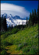 Meadow below Mount Rainier caped by cloud. Mount Rainier National Park, Washington, USA.