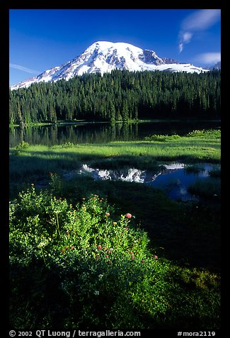Mt Rainier and reflection, early morning. Mount Rainier National Park, Washington, USA.