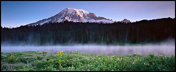 Wildlflowers, rising fog, and Mt Rainer at dawn. Mount Rainier National Park (Panoramic color)