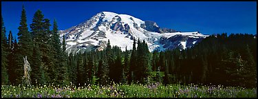 Flowers, trees, and snow-covered mountain. Mount Rainier National Park, Washington, USA.