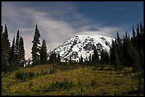 Moonlit Meadow and Mt Rainier. Mount Rainier National Park, Washington, USA. (color)