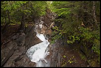 Water rushes down Van Trump Creek. Mount Rainier National Park, Washington, USA. (color)