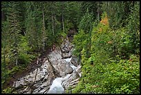 Van Trump Creek flows in lush forest. Mount Rainier National Park ( color)