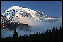 Mt Rainier, above fog and treeline at sunrise. Mount Rainier National Park, Washington, USA. (color)
