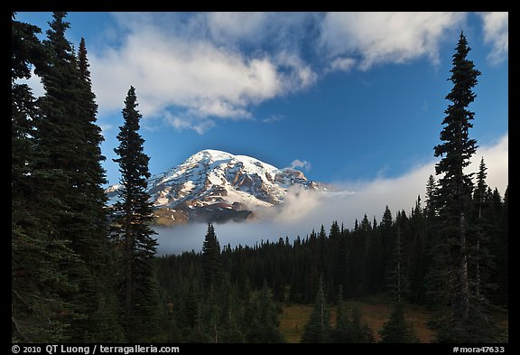 Conifers, clouds, and Mount Rainier. Mount Rainier National Park (color)