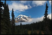 Conifers, clouds, and Mount Rainier. Mount Rainier National Park, Washington, USA. (color)