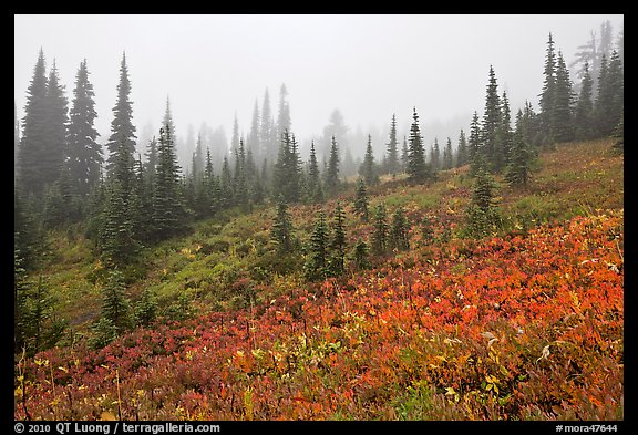 Foggy alpine meadows in autumn. Mount Rainier National Park, Washington, USA.