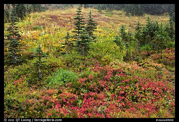 Paradise meadow in the fall. Mount Rainier National Park (color)