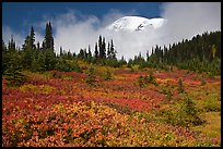 Mount Rainier emerging above clouds and meadows in autumn. Mount Rainier National Park, Washington, USA.