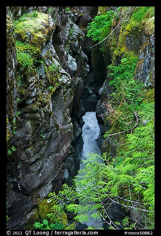 Box Canyon. Mount Rainier National Park (color)