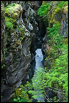 Box Canyon. Mount Rainier National Park, Washington, USA.