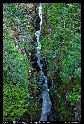 Canyon of the Muddy Fork of Cowlitz River. Mount Rainier National Park (color)
