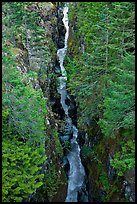 Canyon of the Muddy Fork of Cowlitz River. Mount Rainier National Park, Washington, USA.