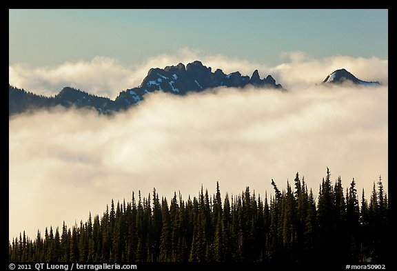 Dark conifers and ridge emerging from clouds. Mount Rainier National Park (color)