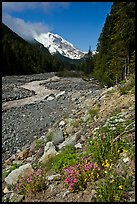 White River creek and Mt Rainier. Mount Rainier National Park, Washington, USA.