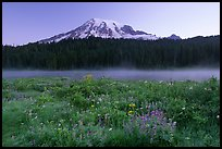 Wildflowers, Reflection Lake and Mt Rainier,  sunrise. Mount Rainier National Park, Washington, USA.
