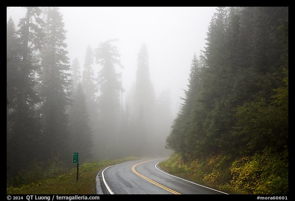 Road in fog. Mount Rainier National Park (color)
