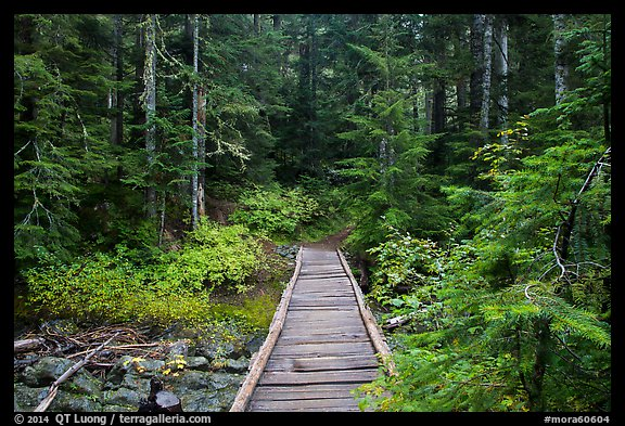 Bridge over Chinook Creek. Mount Rainier National Park (color)