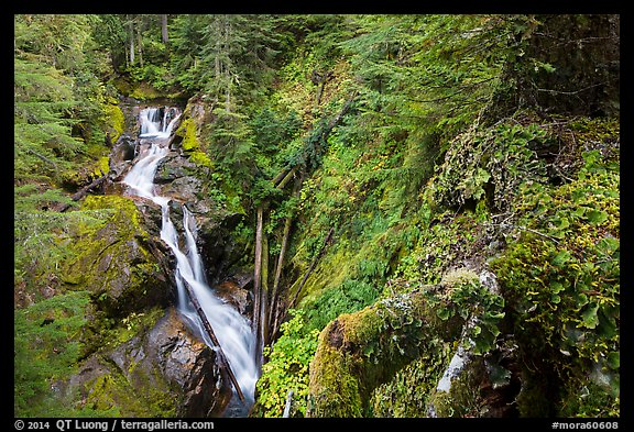 Multi-tiered Deer Creek Falls dropping in forest. Mount Rainier National Park (color)