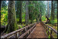 Boardwalk in autumn, Grove of the Patriarchs. Mount Rainier National Park ( color)
