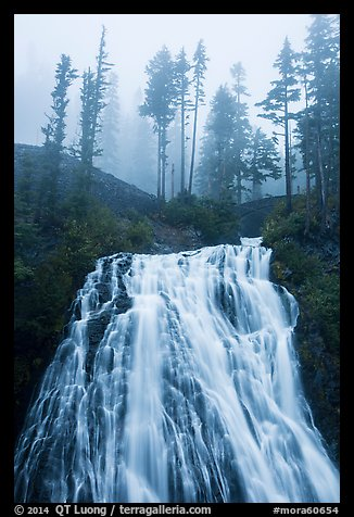 Narada Falls and trees in fog. Mount Rainier National Park (color)