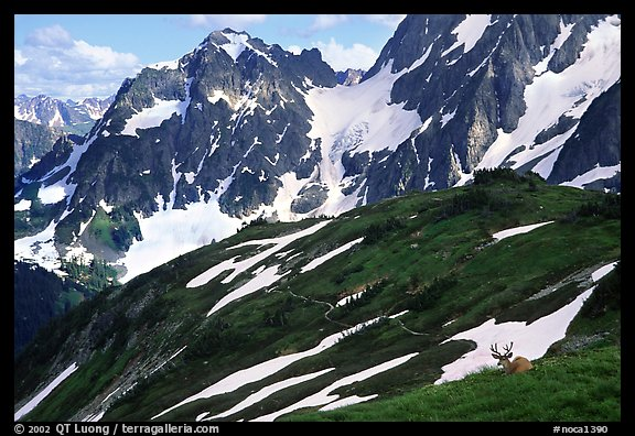 Mule deer and peaks, early summer, North Cascades National Park.  (color)