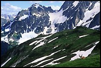 Mule deer and peaks, early summer, North Cascades National Park. Washington, USA.
