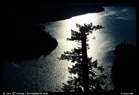Backlit Tree and Diablo lake, North Cascades National Park Service Complex.  (color)