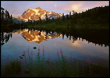 Fireweed, Mount Shuksan reflected in Picture lake, sunset.  ( color)