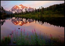 Fireweed flowers, lake with mountain reflections, Mt Shuksan, sunset, North Cascades National Park. Washington, USA.