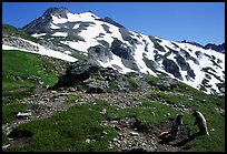 Marmots and Sahale Peak, morning, North Cascades National Park. Washington, USA. (color)
